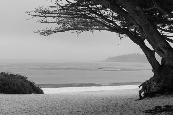 Cypress Tree copyright 2016